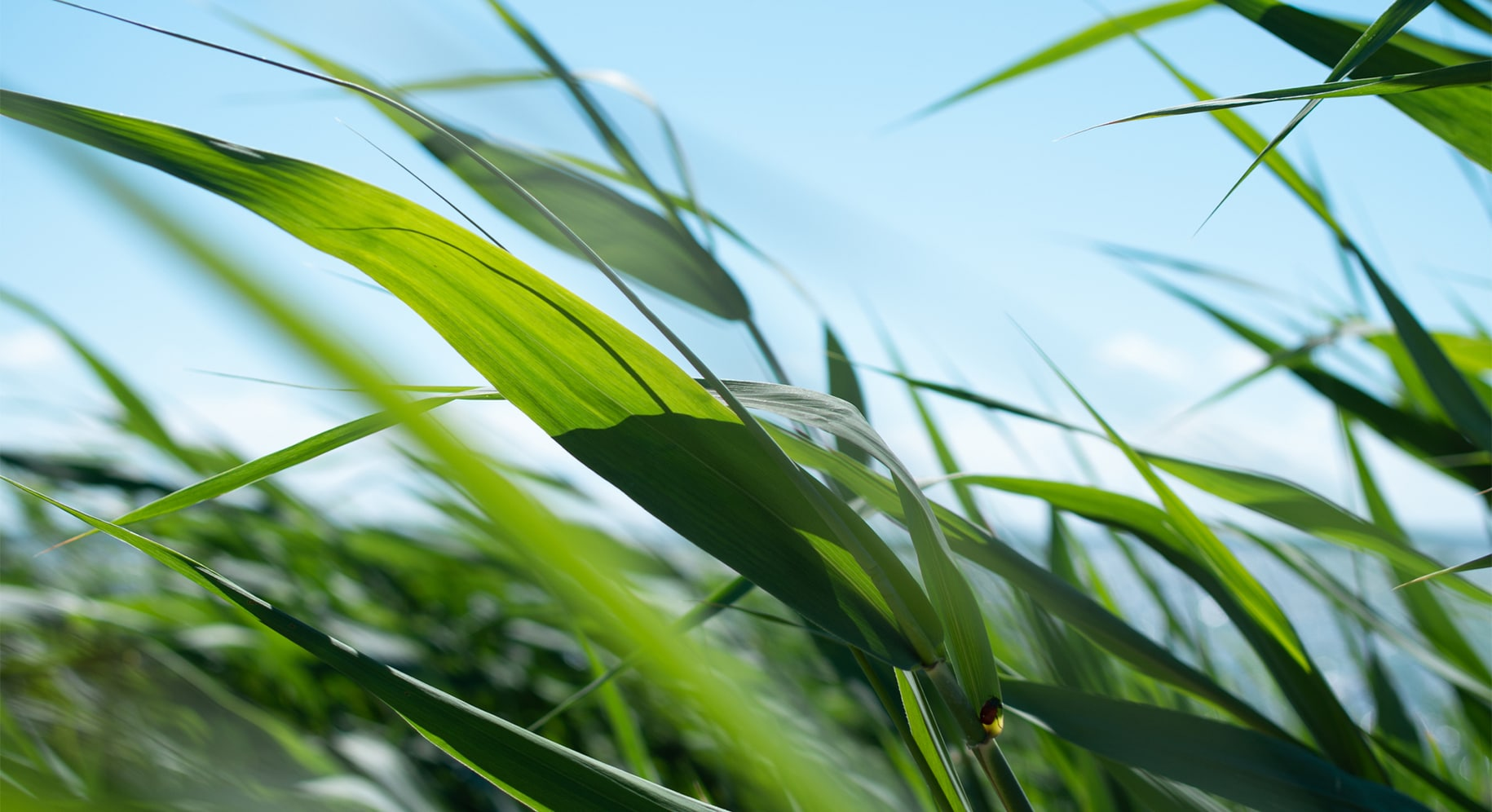 close up view of blades of grass