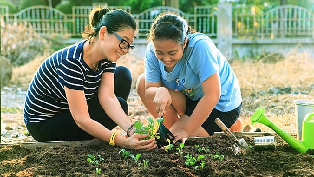 Two girls planting plants in garden