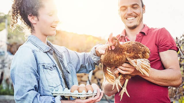 A couple holding eggs and life chicken on a farm