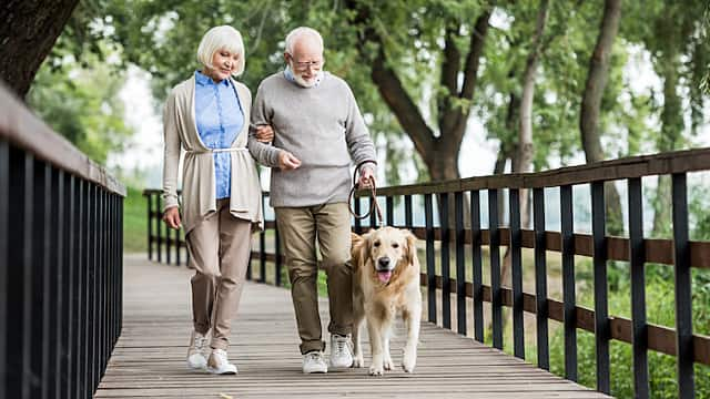 happy senior couple walking with dog across wooden bridge in park
